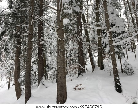 Snowy winter forest in the Austrian Alps, Kufstein, January 2017.