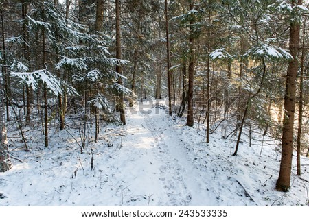 snowy winter forest with snow covered trees in country