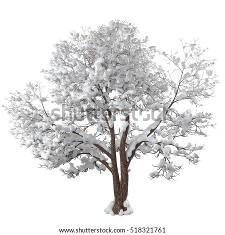 Snowy winter tree. Forked trunk. Long branches covered with sparkling snow. Isolated on white background. 3D rendering.