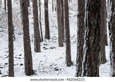 Snowy woods of Mount Etna