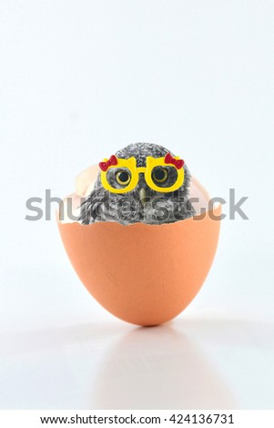 So cute , Spotted owlet and glasses