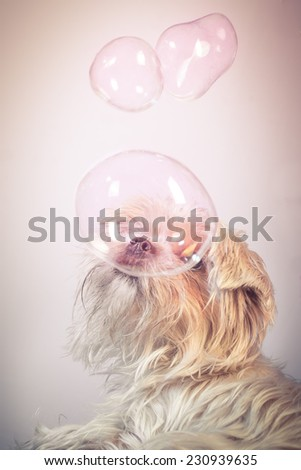 Soap Bubbles with little dog - stock photo