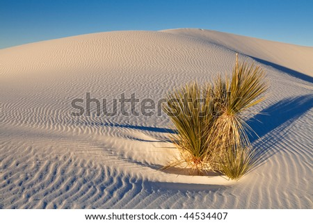 Soaptree Yucca Plant on Sand Dune at White Sands National Monument, New Mexico, USA. - stock photo