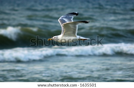 soaring seagull - stock photo