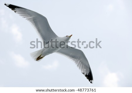 Soaring seagull in blue sky - stock photo