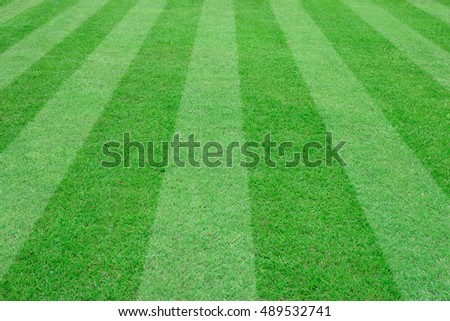 soccer field for background