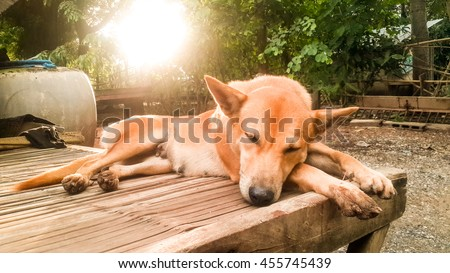 soft and blur Focus of Lonely Dog on bamboo table in Sunset Time, vintage style.   - stock photo