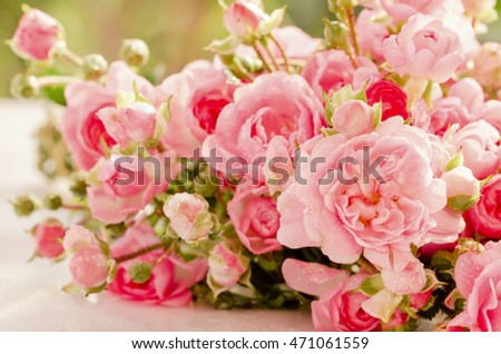 Soft and blur of pink roses for background.