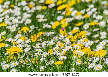 Soft background with wildflowers meadow - stock photo