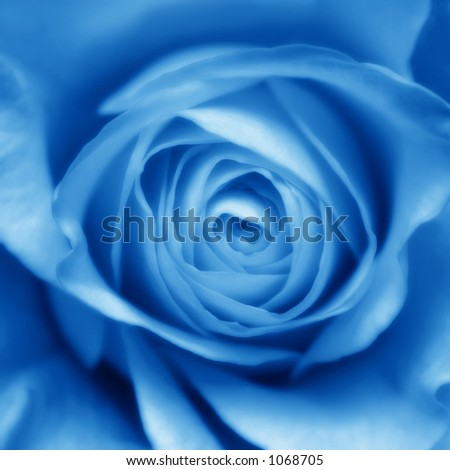Soft blue toned rose bud, modified in photoshop - stock photo