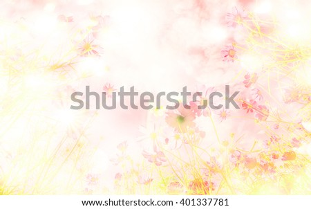 Soft blur of cosmos flowers with bokeh in the pastel color style  for background. - stock photo