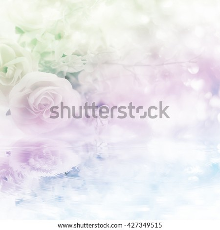 Soft blurred of rose flowers with soft bokeh in pastel color style with made the filters water reflection effects for background. - stock photo