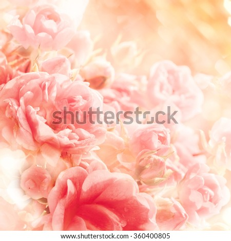 Soft blurred of roses flowers with soft bokeh in pastel tone for background. - stock photo