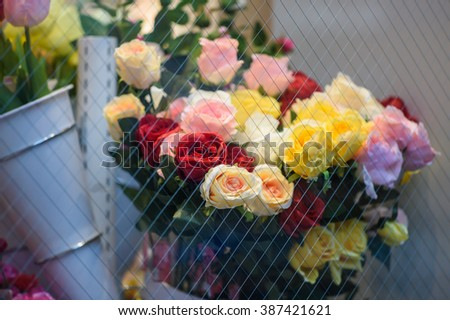 Soft color Roses in flower shop