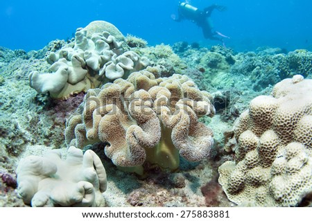 Soft coral and diver underwater. - stock photo