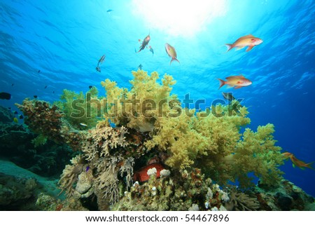 Soft coral and Tropical Fish in sunlight