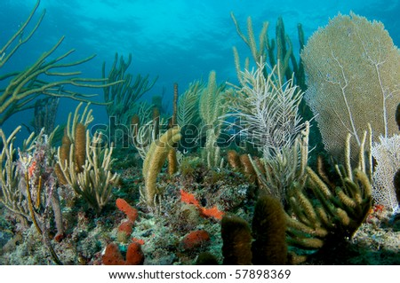 Soft Coral Composition, on a reef ledge, Lauderdale By The Sea, Florida - stock photo