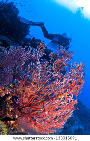 Soft Coral in the Caribbean - stock photo