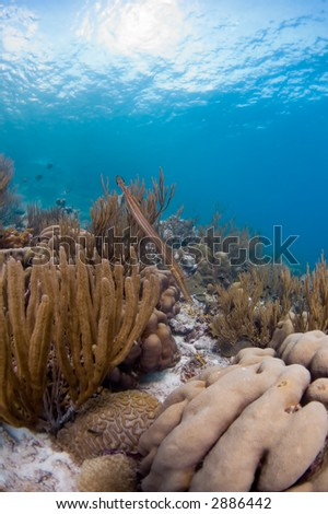 Soft coral reef - stock photo