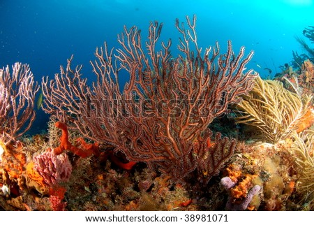 Soft corals - stock photo
