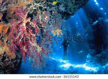 Soft corals and diver in front of sun rays - stock photo