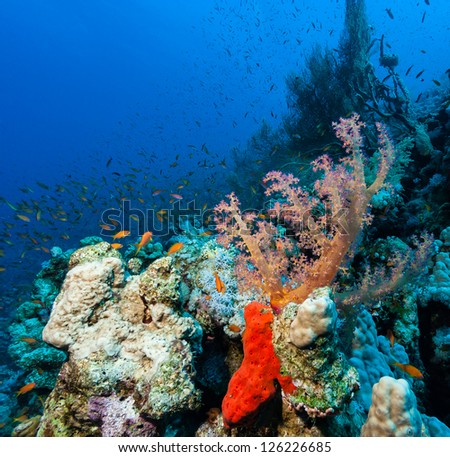 Soft corals and red sponges on a coral reef