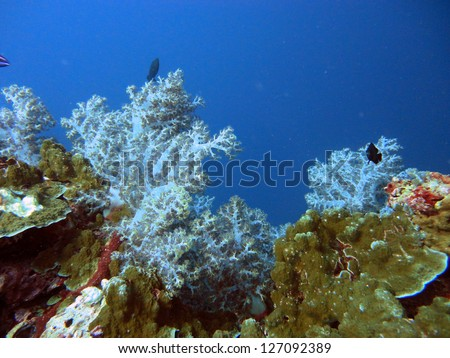 soft corals at the underwater coral reef - stock photo