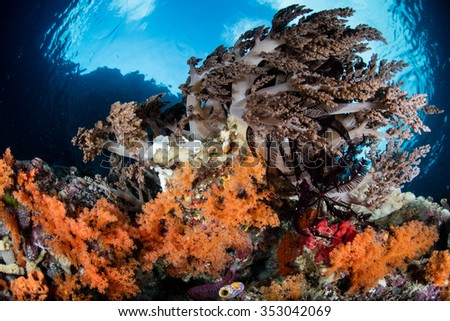 the current status of indonesias coral A new study by the indonesian institute of sciences indicates that 30 percent of  indonesia's coral reefs have been depleted by ocean acidification, overfishing.