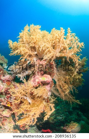 Soft corals on a healthy tropical coral reef - stock photo