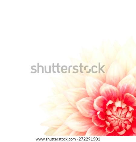 Soft Dahlia? illustration - stock photo