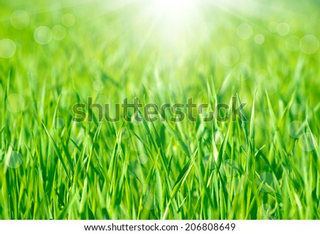Soft defocused spring background with a sunburst and bokeh over lush green grass