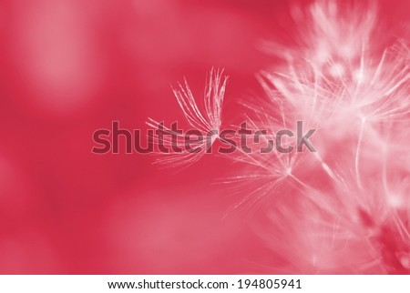 Soft dreamy image of dandelion seeds - stock photo