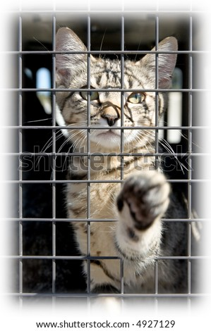 Soft edge on a photo of an orphaned kitten in a cage, reaching out with a paw - stock photo