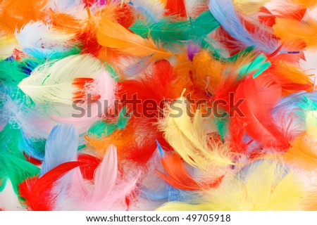 Soft feathers of various color - stock photo