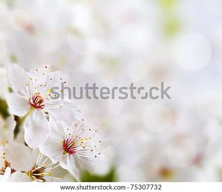 Soft floral background. Spring flowers