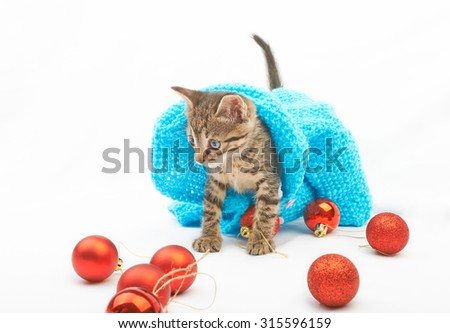 Soft fluffy kitten  in blue sweater playing  with Christmas balls on white background - stock photo
