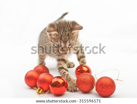 Soft fluffy kitten playing with Christmas balls on white background - stock photo