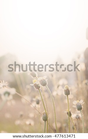 soft focus, a bright vintage of grass flower with flare light