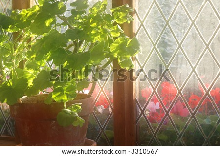 Soft Focus Backlit Geranium and Cyclamen in Diamond Patterned Window - stock photo