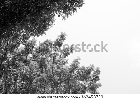 soft focus,blurry tree in the forest.background,black and white - stock photo