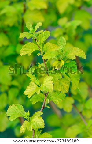 Soft focus close up of spring green leaves - stock photo