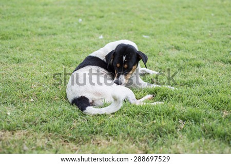 Soft focus dog on green grass background - stock photo