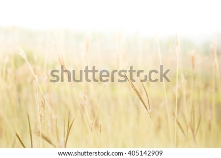 Soft focus Field of grass out door landscape ,vintage tone colour.