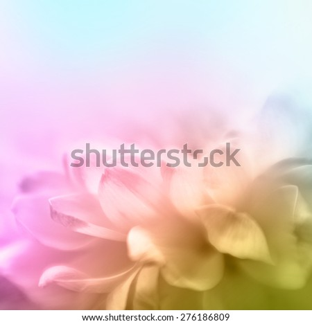 Soft focus flower background with copy space. Made with lensbaby and macrolens. - stock photo