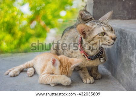 Soft focus Mum cat and kitten. Kitty wants to play with the cat mom - stock photo