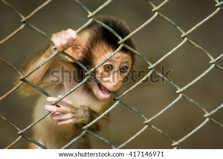 soft focus of baby monkey looking outside the cage.