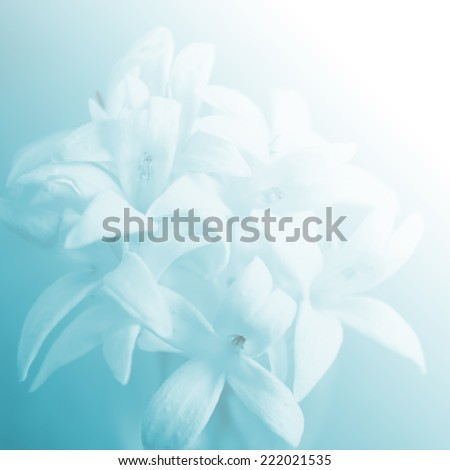 soft focus of beautiful flowers with color filters - stock photo