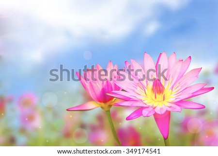 soft focus of lotus flower on day noon light.