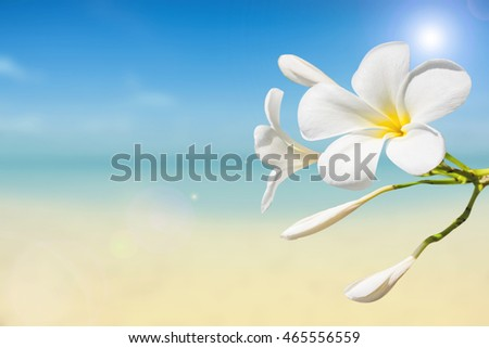 soft focus of Plumeria with white sand and beautiful blue sea over clear blue sky.