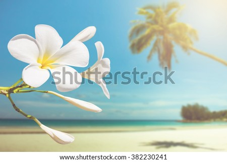 soft focus of plumeria with white sand and beautiful blue sea over clear blue sky on day noon light.